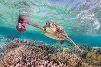zen-beach-retreat-turtle (2)